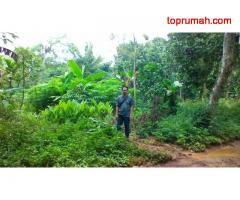 dijual tanah kebun di dekat Grand Taman Sari, Setu, Bekasi