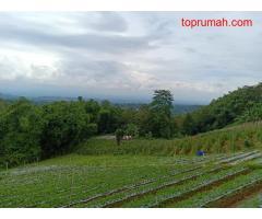 Tanah Tepi Jl. Raya View Kebun Teh Kemuning Ngargoyoso Karanganyar