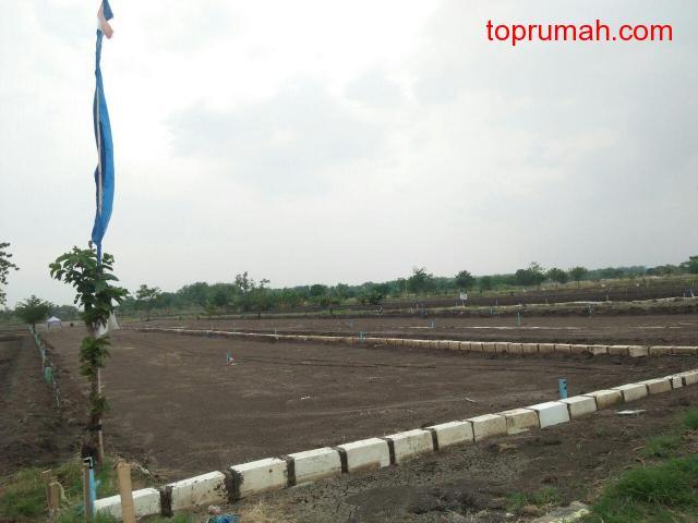 Tanah Kavling Desa Beton