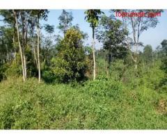 Jual Tanah Perkebunan Sangat Luas di Desa Manggisan Jember