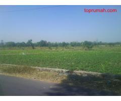 Tanah Sawah 200Ha di Kebonsari Sukorejo(1,5km dari Jln Lintas Kab Pasuruan)
