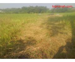 Tanah Sawah 4,9Ha di Kepulungan Gempol(100m dari Jln Raya Sby-Mlg)