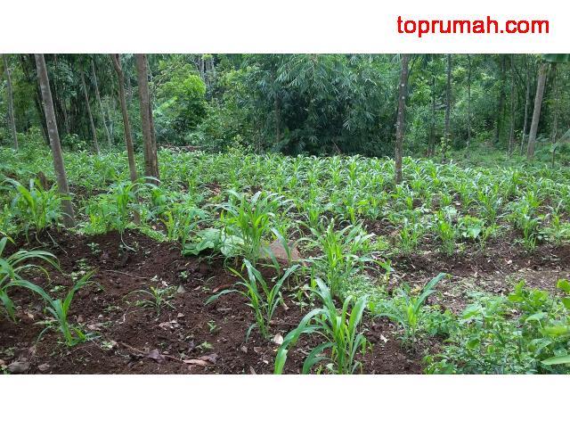 Di jual tanah daerah Nyatnyono - Ungaran - Semarang