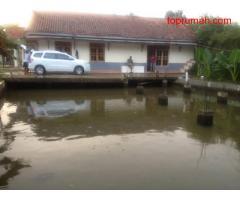 Rumah berlatar luas bonus 2 kolam ikan untuk ternak dan pemancingan