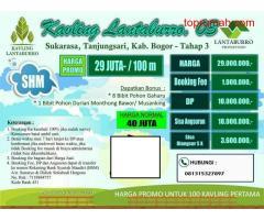 Investasi Kebun Buah Durian di Tanjungsari Bogor