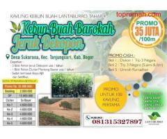 Investasi Tanah Kavling Kebun Buah Jeruk DEKOPON Gratis Perawatan